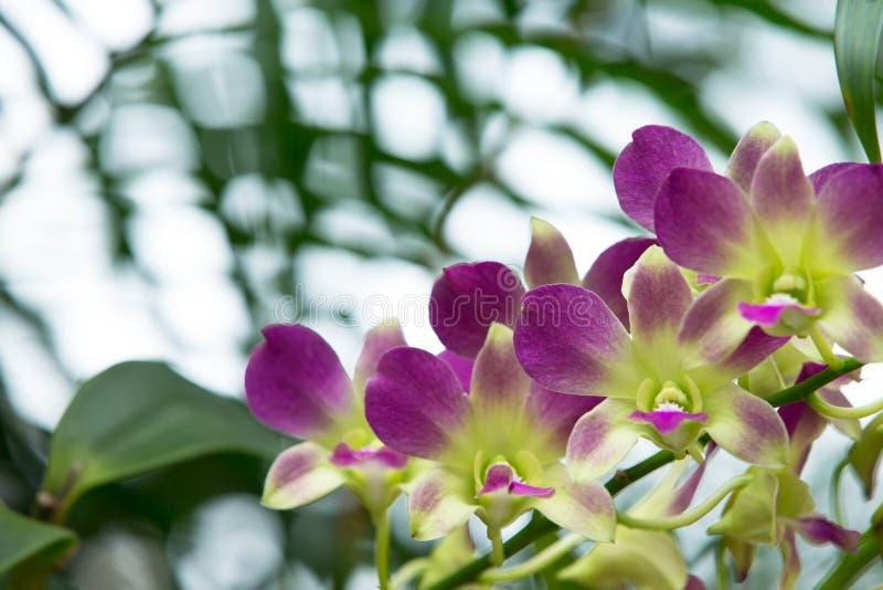 Download Орхидея стоковое фото. изображение насчитывающей свеже - 33729368