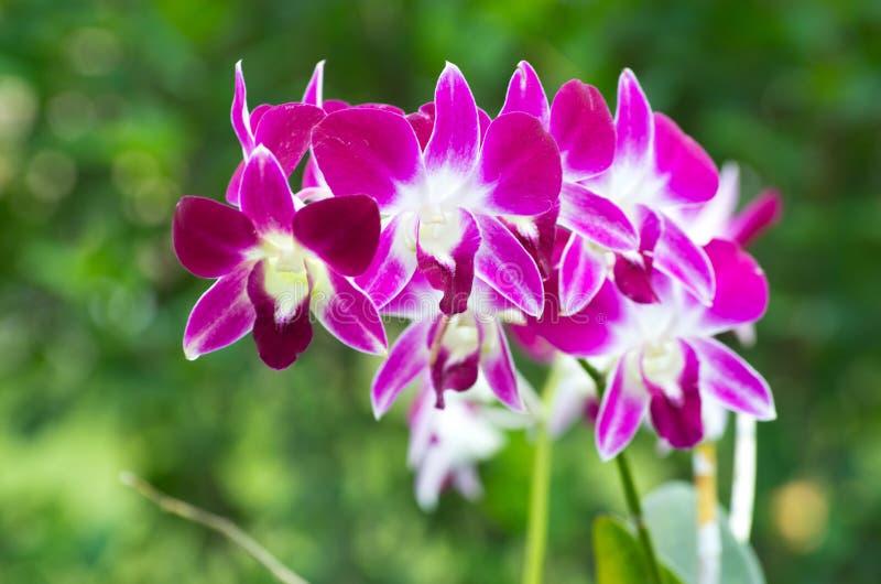 Download Орхидея стоковое изображение. изображение насчитывающей чувствительно - 33730521