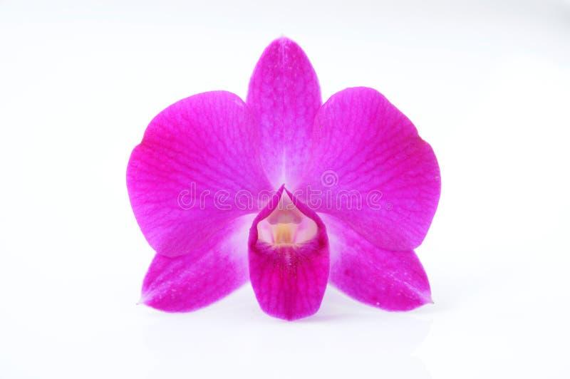Download Орхидея стоковое фото. изображение насчитывающей backhoe - 33734412