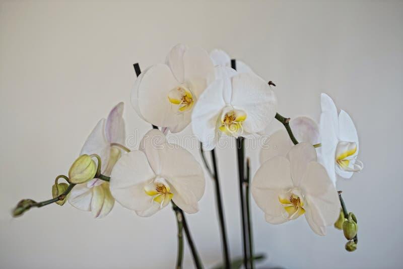 Орхидея стоковые изображения rf