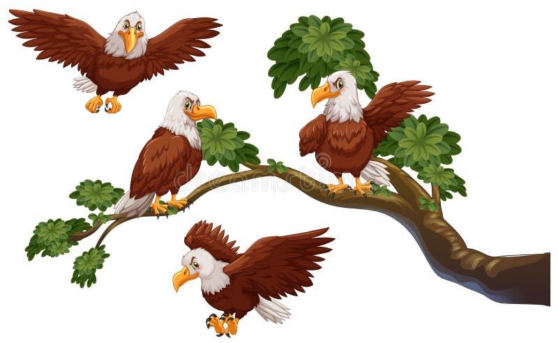 4 орла на ветви бесплатная иллюстрация