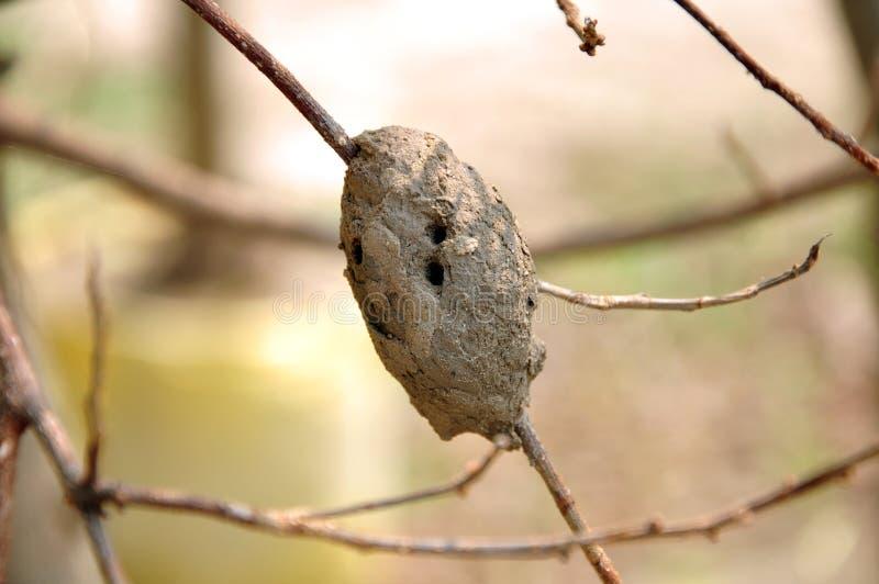 оса гнездя стоковое фото