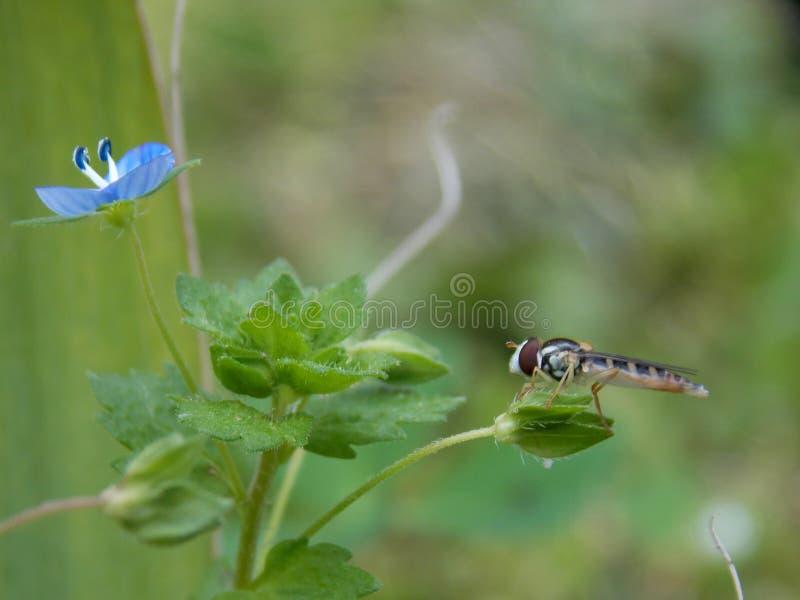 Оса и цветок стоковая фотография rf