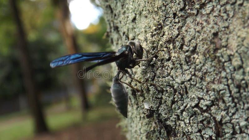 Оса на дереве стоковая фотография