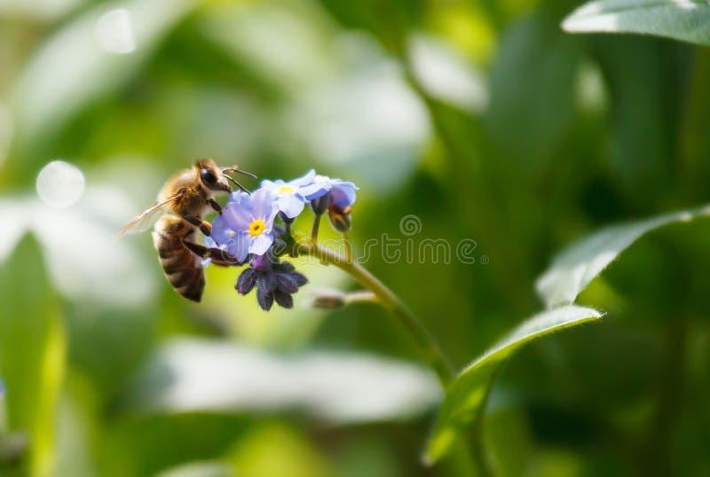 Оса на цветке стоковые фото