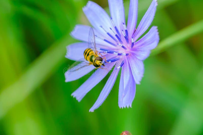 оса цветка стоковые фото