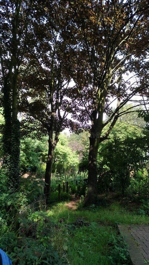 Освежая деревья стоковые фотографии rf