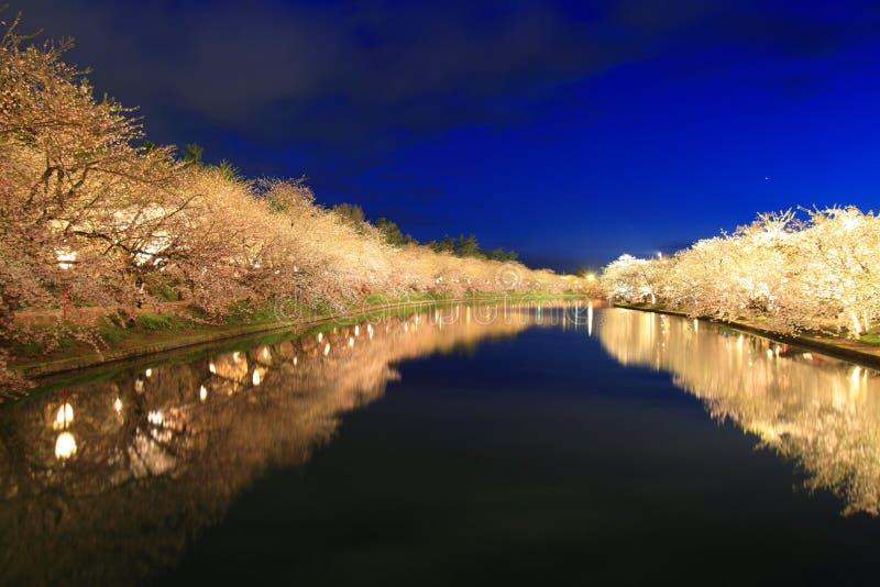 Осветите вверх вишневого дерева стоковая фотография