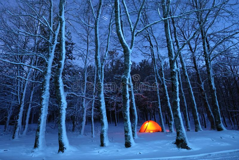 Освещать шатер в древесинах Snowy парка Nebrodi, Сицилия стоковые фото