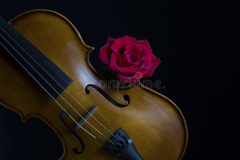 Освещение низкой ключевой скрипки и розового цветка мягкое стоковые изображения