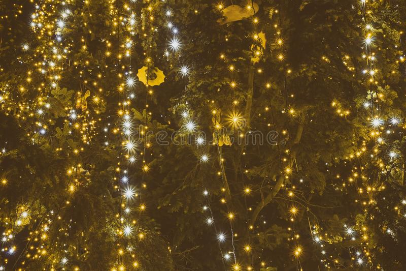 Освещение рождества на рождественской елке Конец-вверх тайна стоковая фотография