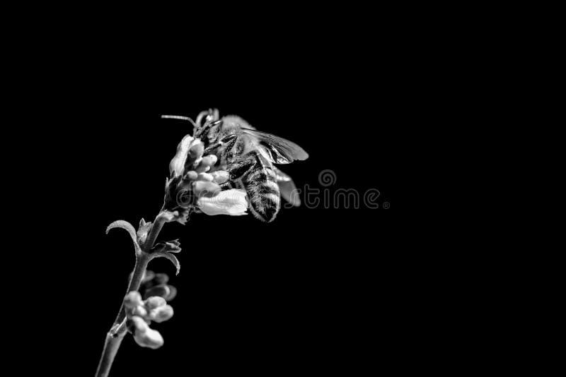 Осведомленность смерти пчелы меда из-за проблем изменения климата стоковые изображения