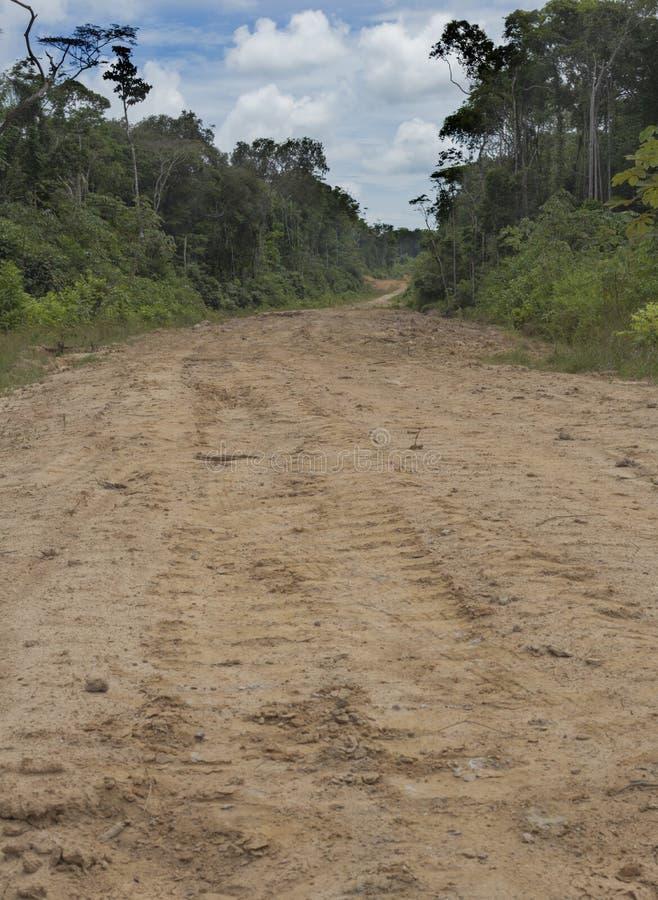 Освобоженный дождевой лес для новой дороги, Французских Гвиан стоковые фотографии rf