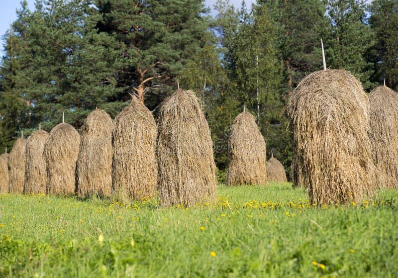 Освободите штабелированное сено на летний день стоковое изображение
