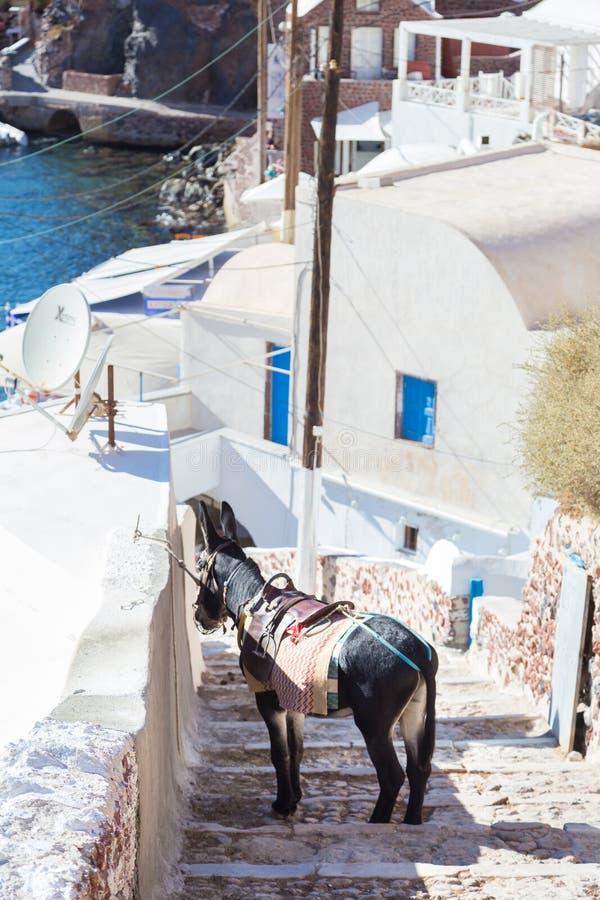 Осел который работает как туристские такси на острове Santorini, Киклады, Греция стоковая фотография