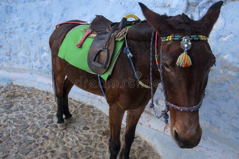 Осел Santorini - символ острова Santorini, Thira, Греция Осел в Fira на Santorini в эгейском Традиционный грек стоковые фотографии rf