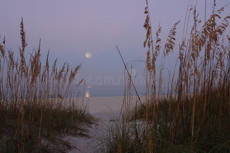 Осеннее полнолуние над Мексиканским заливом стоковые изображения