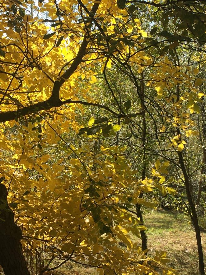 Осенние дни в одичалом месте стоковые изображения