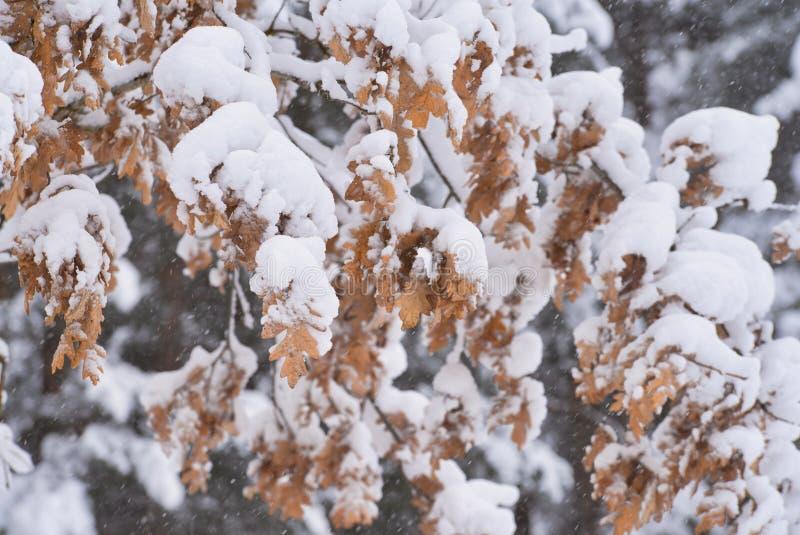 Осенние листья покрытые со снегом в лесе стоковое изображение