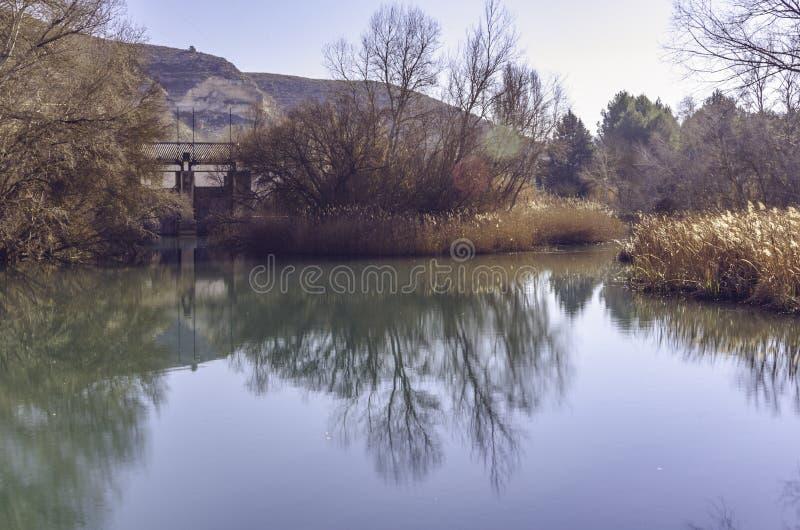 Осенние пейзажи на берегах болота стоковые фото