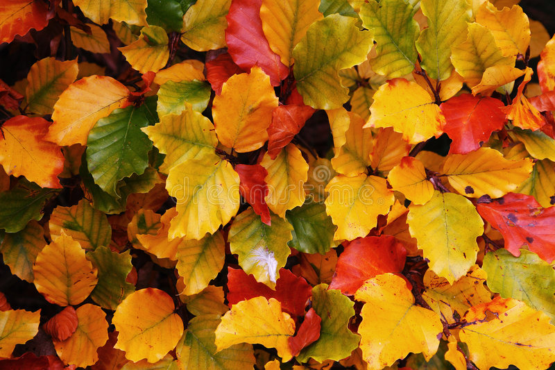 осенние цветастые листья стоковое фото