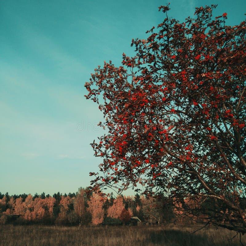 Осенние цвета стоковое изображение