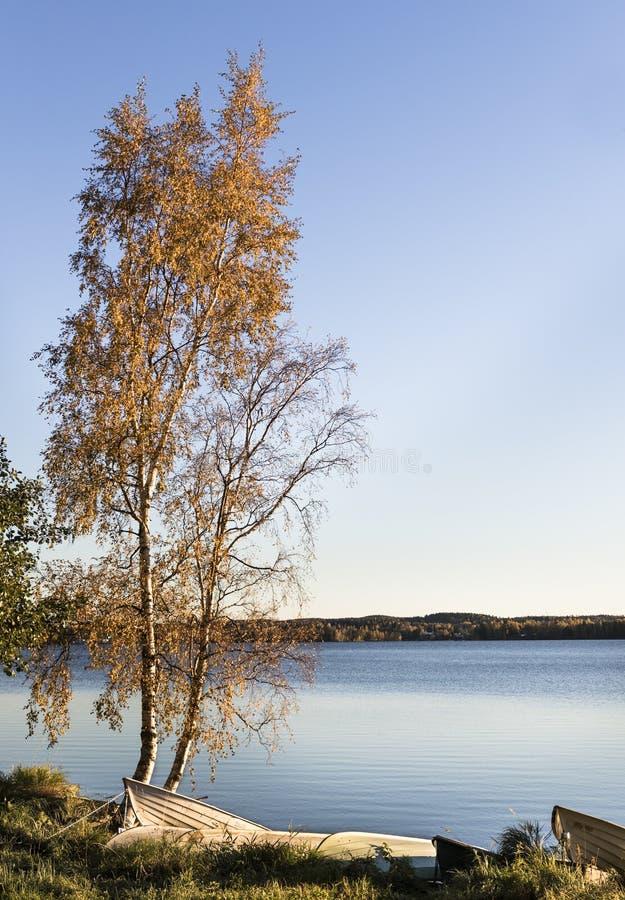 Осенний берег озера стоковые изображения rf