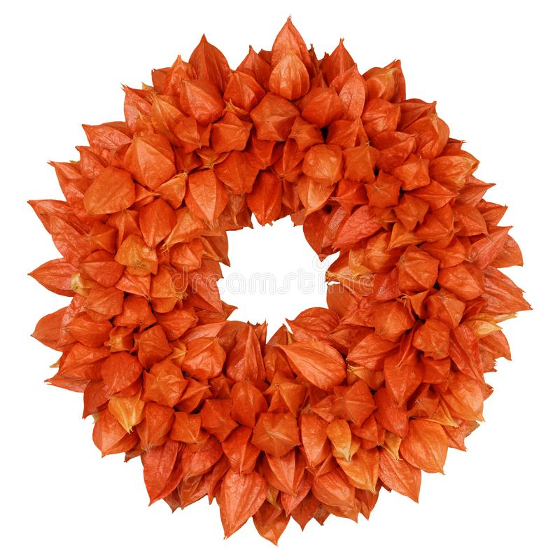 Осенний венок с alkekengi физалиса физалиса на белизне стоковое изображение