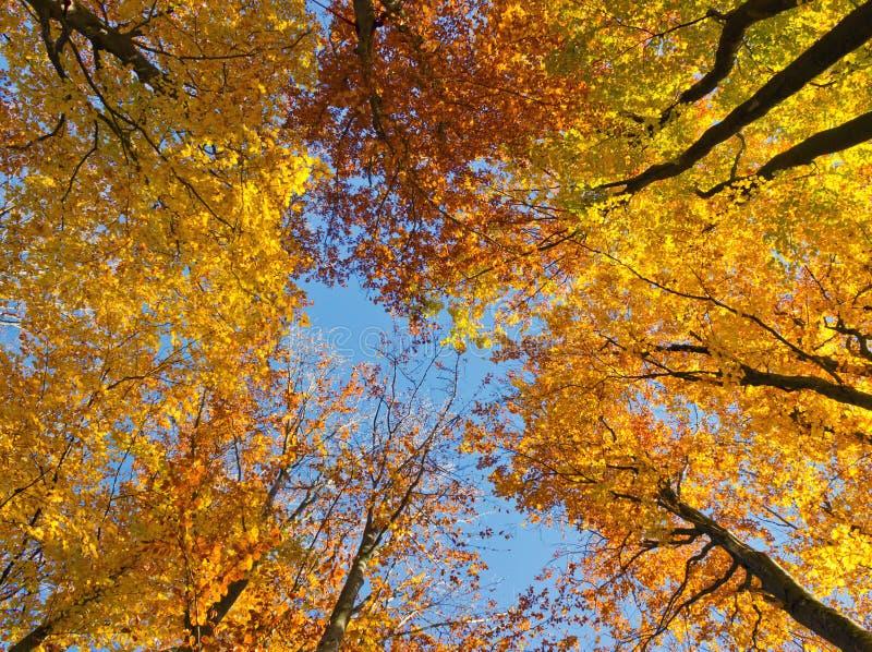 Осенний лес стоковая фотография rf