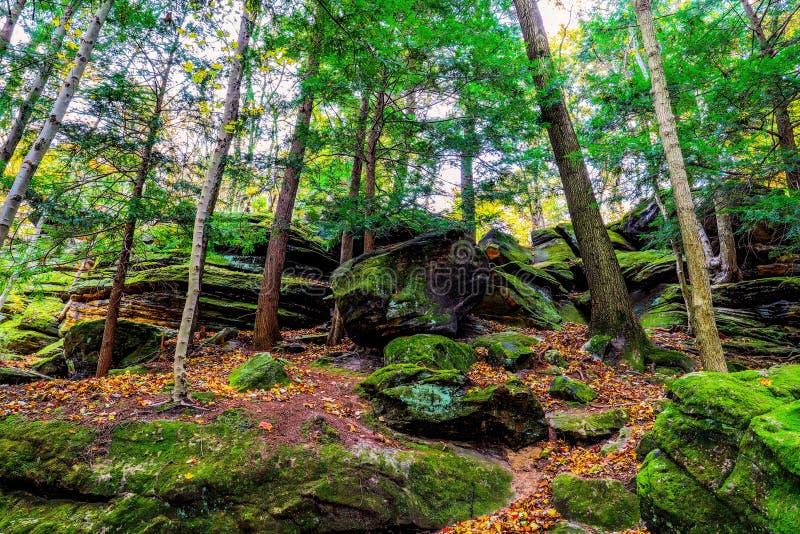 Осенний живописный парк стоковое фото rf