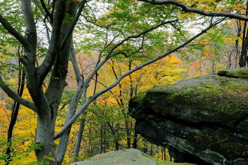 Осенний живописный парк стоковое изображение