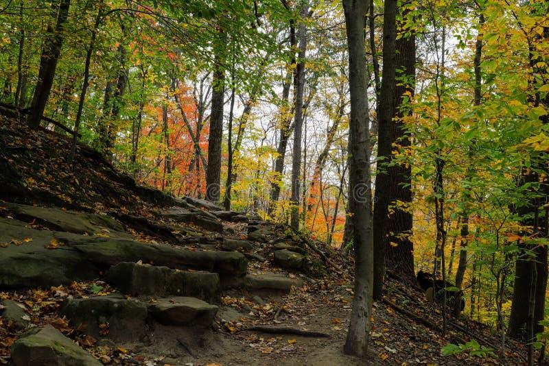 Осенний живописный парк стоковая фотография