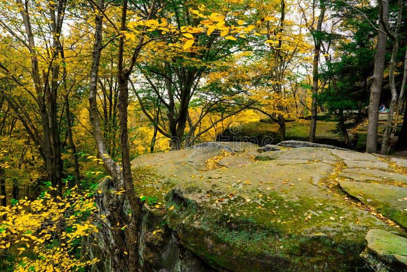 Осенний живописный парк стоковые фото
