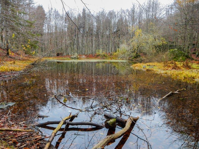Осенний ландшафт озера Penna, небольшого пруда горы на держателе Penna, в природном парке Aveto региональном, Италия стоковые изображения