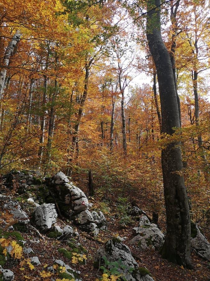 Осенний лес в горах стоковая фотография rf