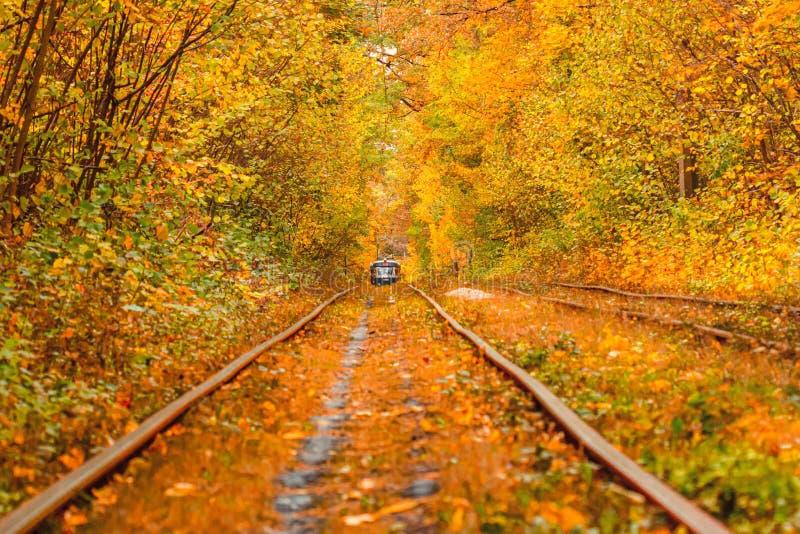 Осенний лес, через который на Украине проходит старый трамвай стоковое фото