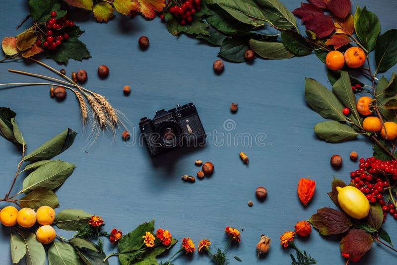 Осенний фон желтый и красный лист камера фрукты орехи стоковые фото