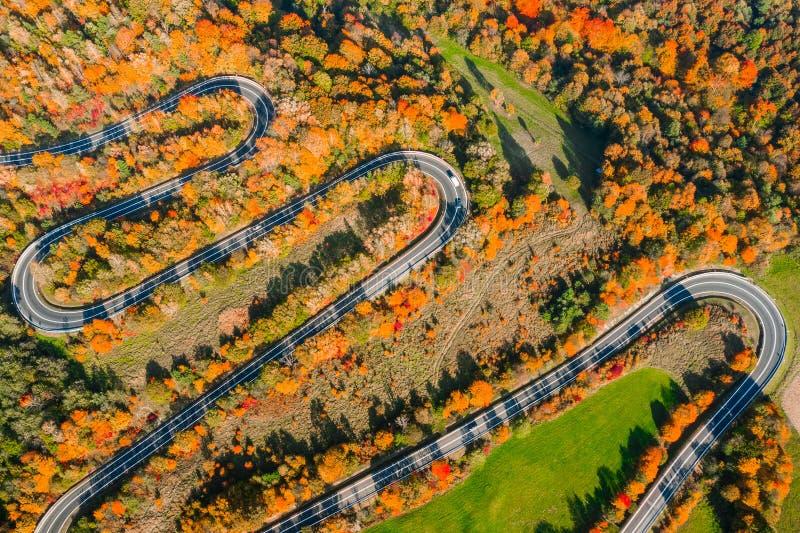Осенняя извилистая дорога в лесу стоковая фотография