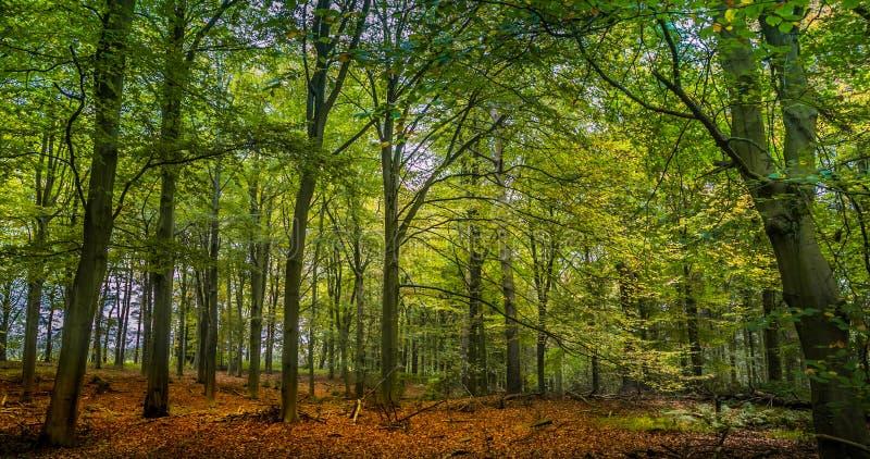Осенняя сцена полесья стоковые фотографии rf