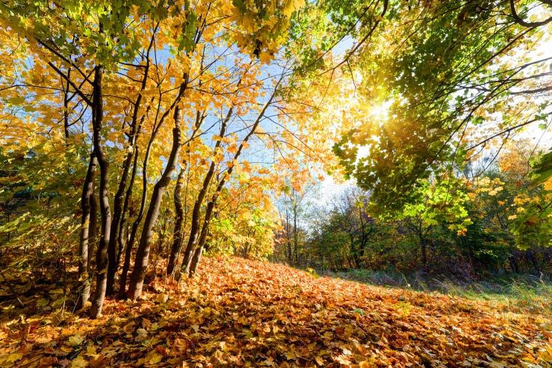 Осень, ландшафт падения в лесе стоковые фотографии rf
