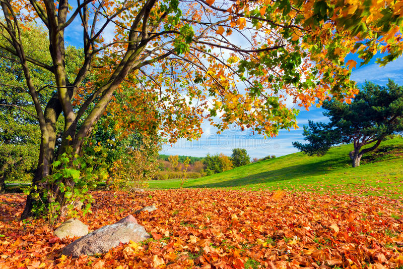 Осень, ландшафт падения цветастый вал листьев стоковое фото