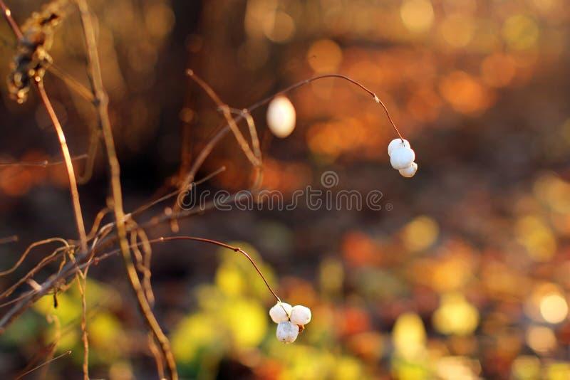 Осень, апельсин, предпосылка стоковая фотография