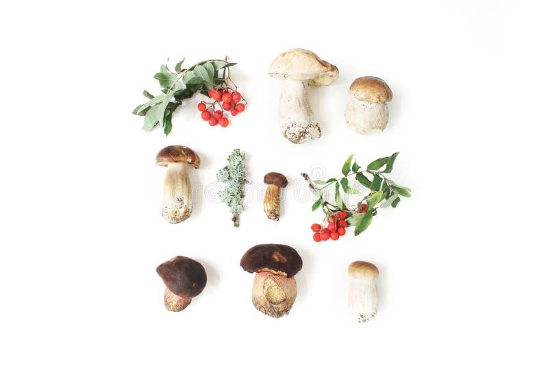 Осень ввела ботаническое расположение в моду Состав грибов porcino, подосиновик edulis, ягоды рябины и лишайник на белизне стоковая фотография rf