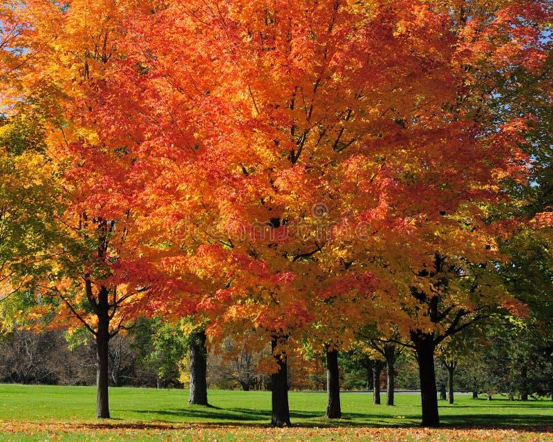 Осень вдоль восточного Parkway в Оттава стоковые фотографии rf