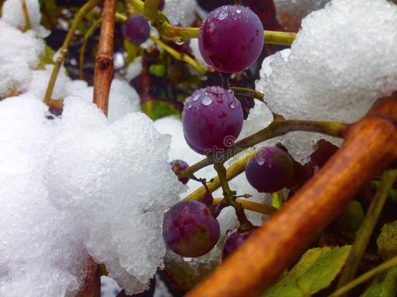 Осень встреченная с зимой стоковое фото rf