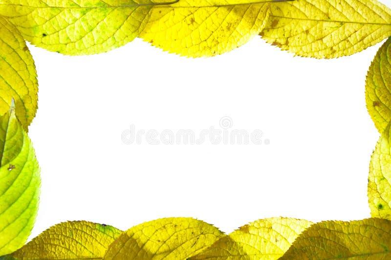 Осень выходит рамка изолированный на белую предпосылку стоковые изображения rf