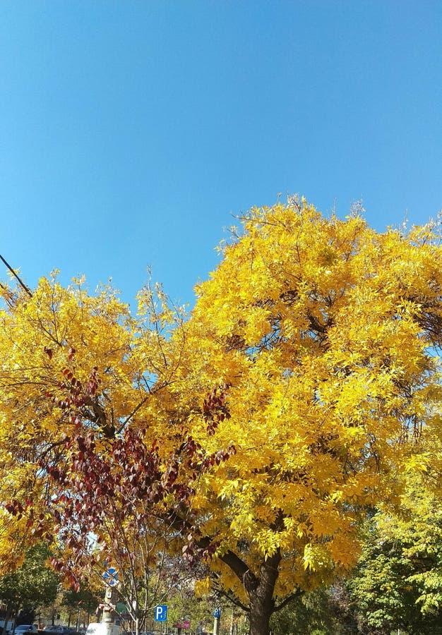 Осень в Бухаресте стоковое изображение