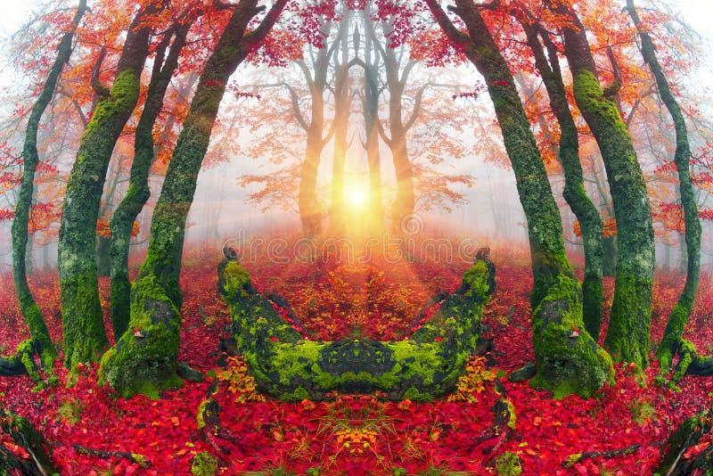 Осень в высокогорном лесе стоковая фотография rf