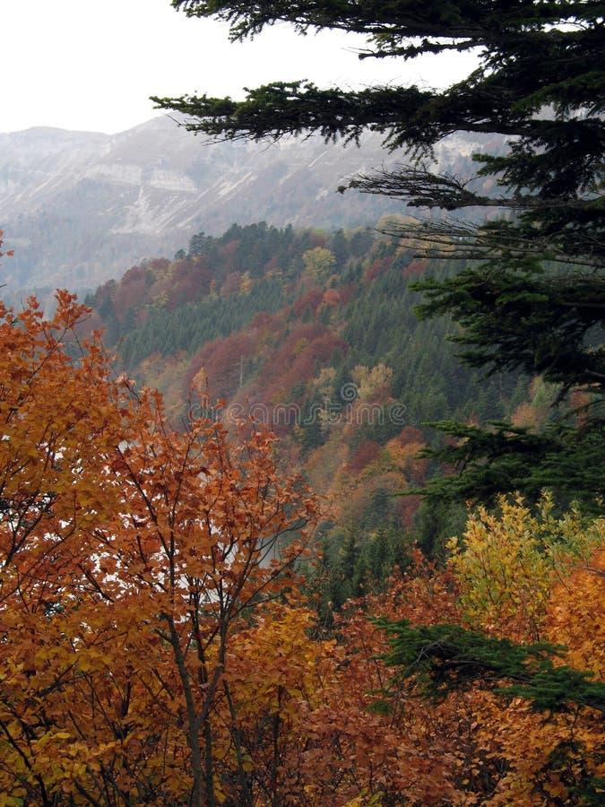 Осень в горах Юры стоковое фото rf