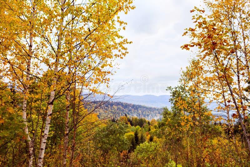 Осень в горах стоковое фото